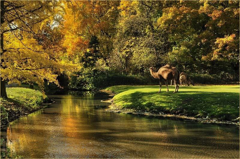 Берлин, Тирпарк (Tierpark Berlin) © Фото M. Кабаковой