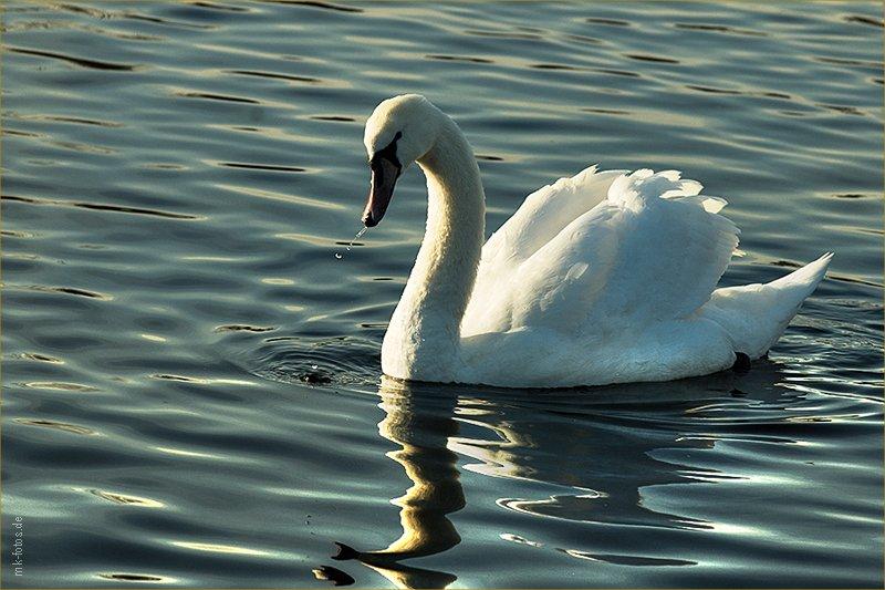 Тегельское озеро (Tegeler See) © Фото M. Кабаковой